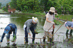 rice planting 3